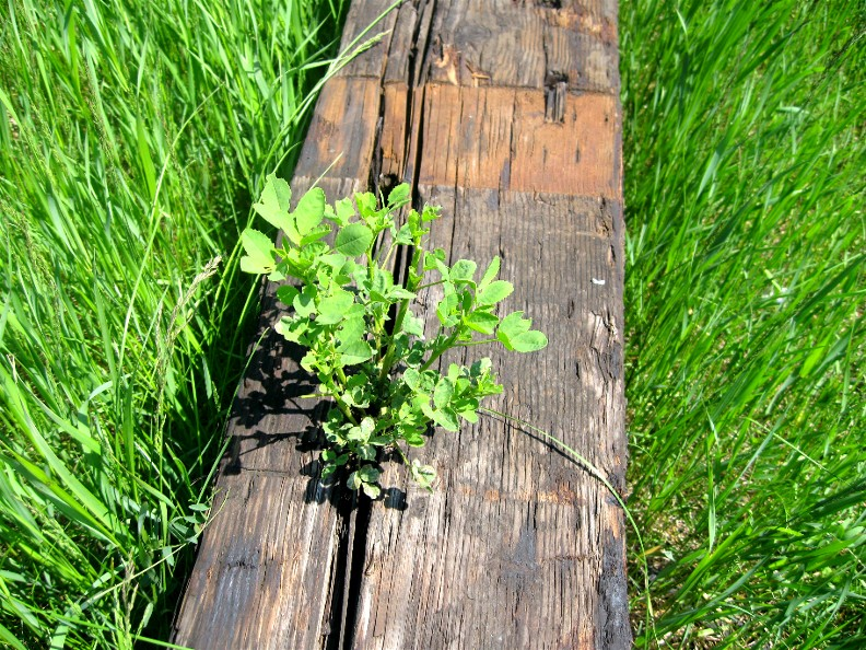 Railroad Tie with Green