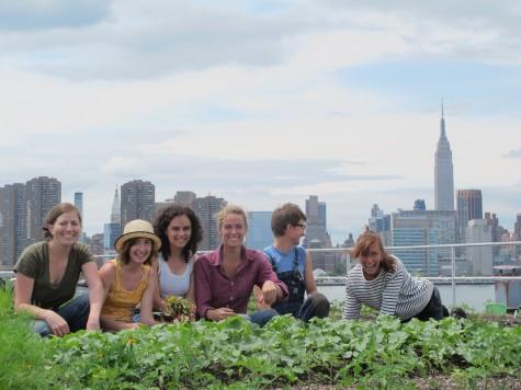 Rooftop farm, New York, via rooftopfarms.org