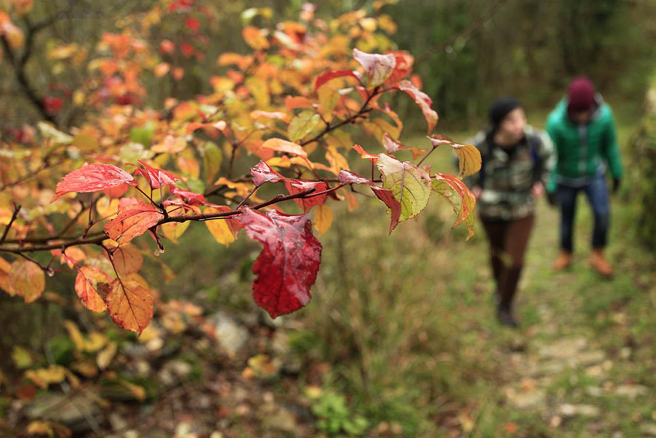 Autumn in Groppo Dalosio, Via Francigena, Liguria, Italy, photo by Enrico Caracciolo, all rights reserved