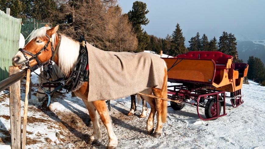 Horse Sledge in Dolomiti, Italy