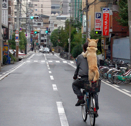 Biking with a dog holding to the biker's shoulders in Jaoan