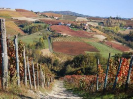 Autumn in vineyards