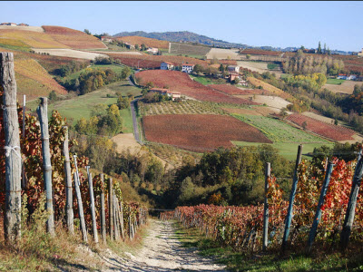 Autumn in vineyards