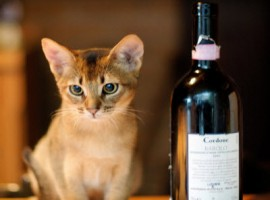 The kitten and the barolo