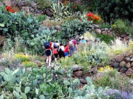 Trekking in Alicudi