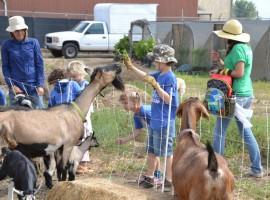 Kids' farm