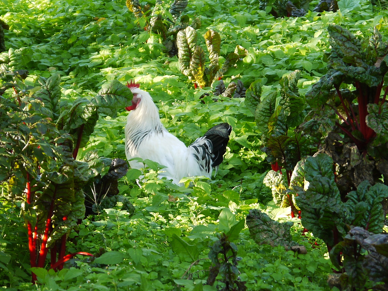 Vegetable Garden in La Fonte organic Farm, Trento