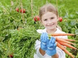 Vegetable garden in holiday