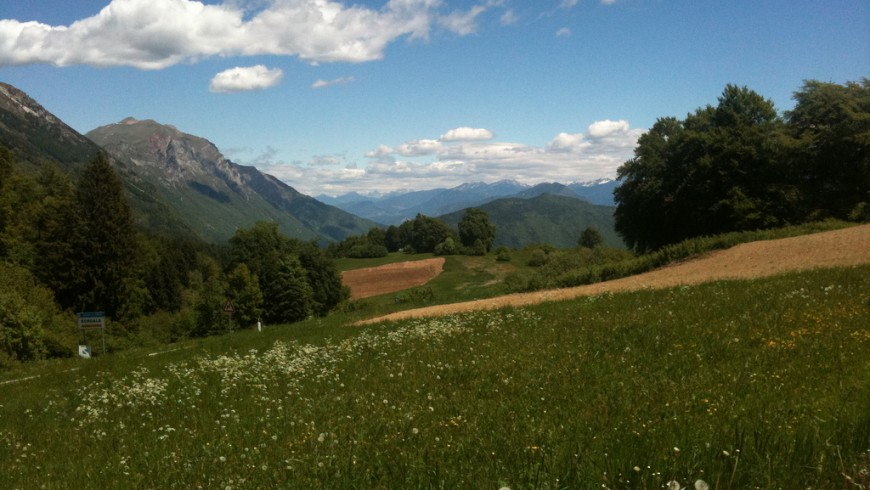 A view of Gresta Valley in Trentino: mountains, trees, blue sky and flowers