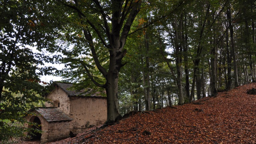 A forrest in Valsesia: trees and an ancient house