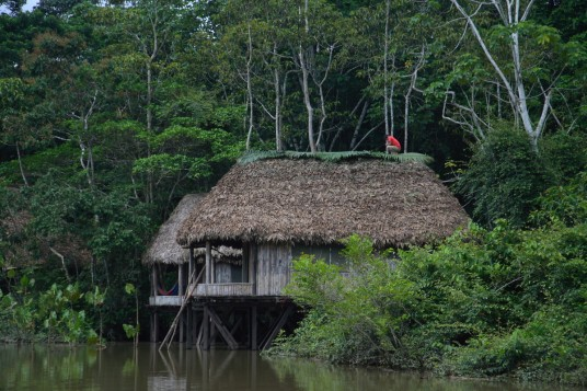 Hut on the river of the Amazon rainforest