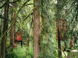 Tree houses hidden in the wood