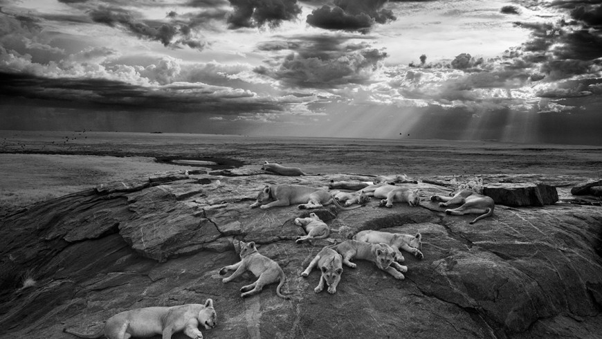 wildlife-photographer-year-2014