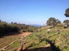 La Navicella Winery, Port Cros Park