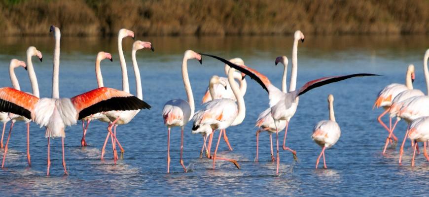Pink Flamingos, Port Cros