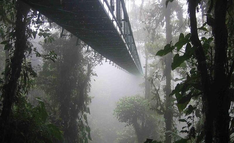 Santa Elena Skywalk in Costarica