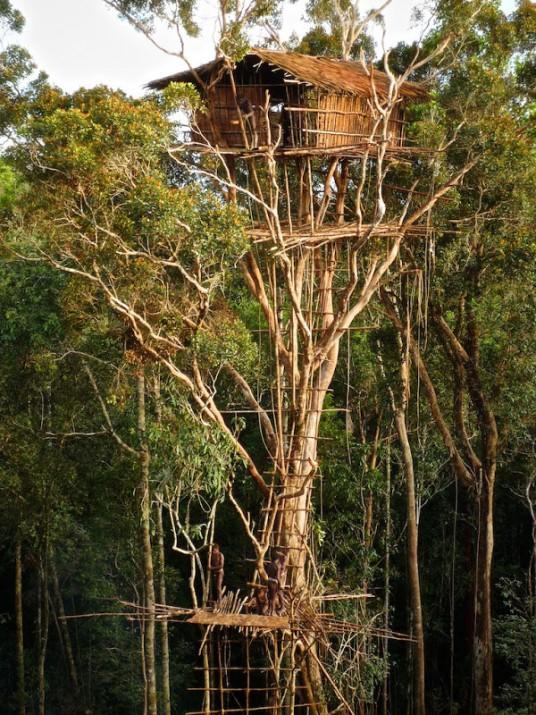 Treehouse of Korowai Tribe