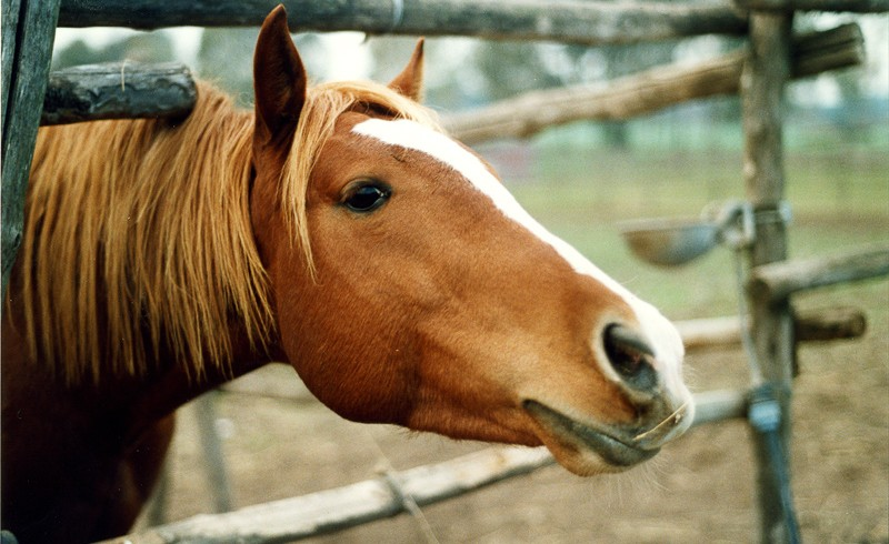 horse in a farm camp