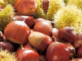 Amiata's chestnuts