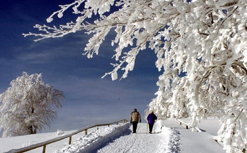Snow in the Black Forest
