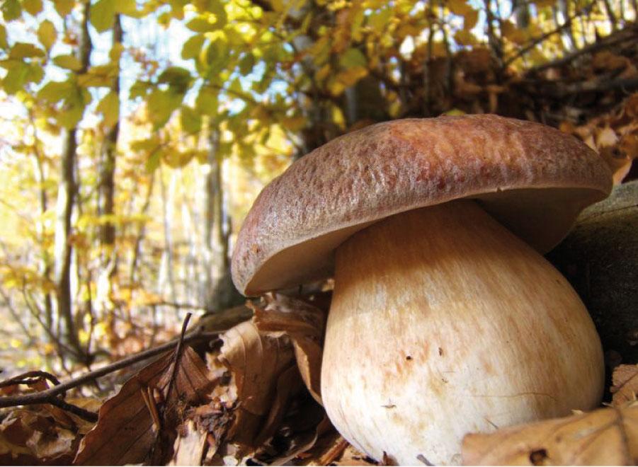 Mount Amiata's mushroom