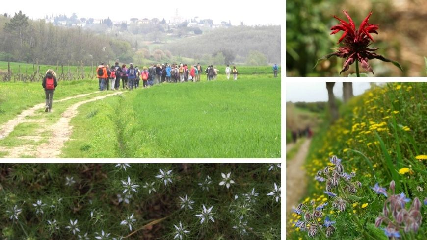 Flowers and aromatic herbs to discover near the b & b La Fanciullaccia