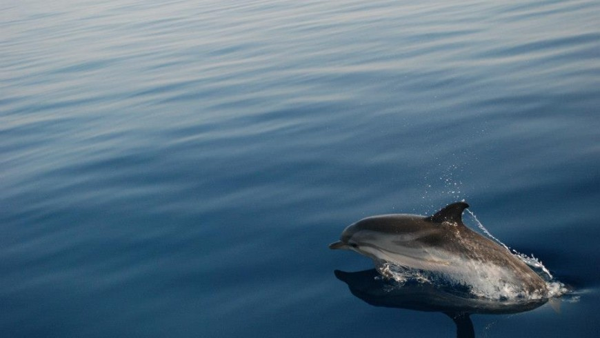 Dolphin in Greece