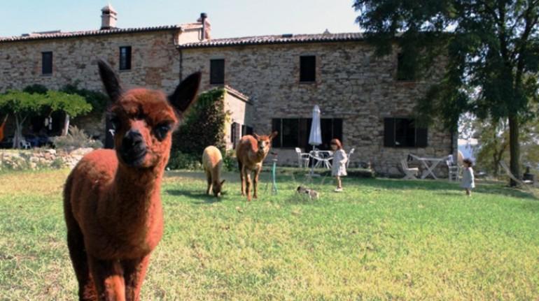 farm holidays with alpaca
