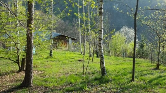 A house in the woods in Piedmont