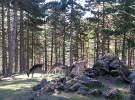 Alpine Garden of Pietra Corva