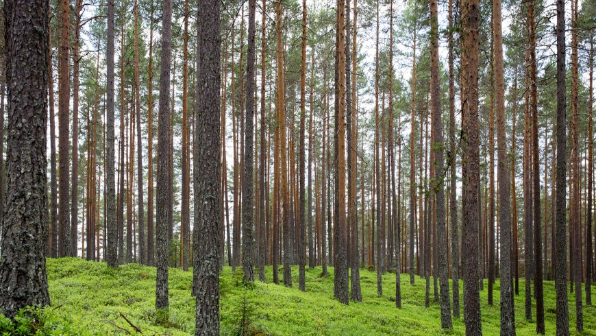 The trees are the first step in combating climate change, that is why the goal of Earth Day 2016 is to plant 7.8 billion trees