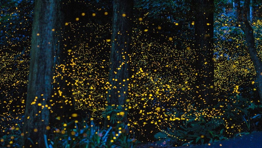 The arrival of summer and fireflies