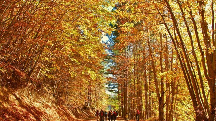 Foliage in Sila National Park, Calabria