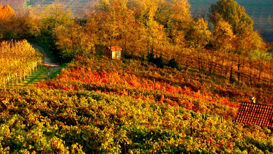 The foliage in the Langhe, Piedmont
