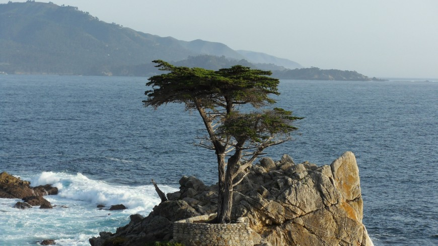 """Lone Cypress"", the tree icon of California"