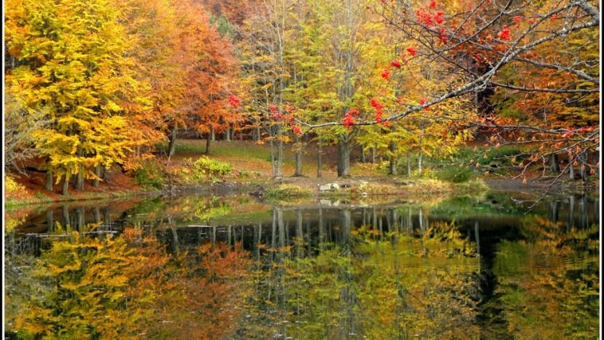Foliage in the Regional Park of Corno alle Scale