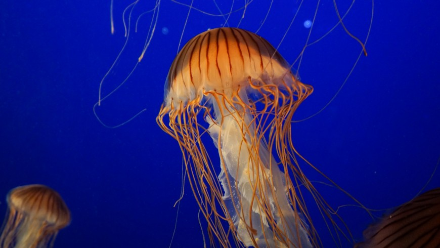 Monterey Bay Aquarium, California