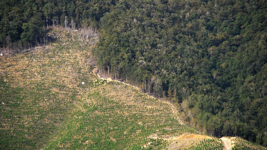 The destruction of the environment (for example with deforestation) is now a crime against humanity