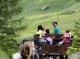 horse-drawn carriage tour from Plan to the ancient farms