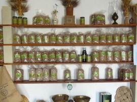 Organic farm in Salento
