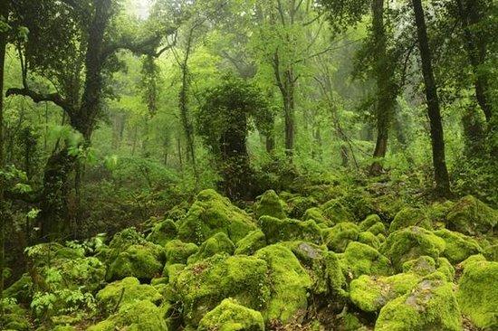 Sasseto forest