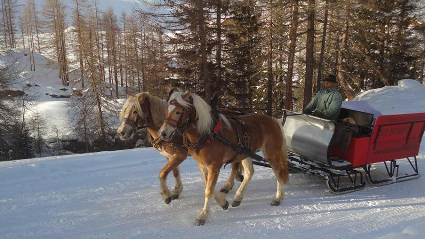horses drawn sled