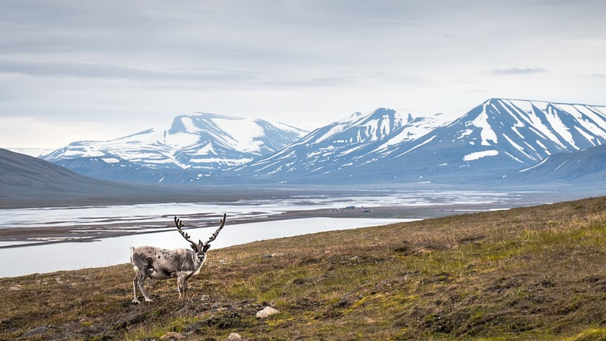The Svalbard Islands, halfway between Norway and the North Pole