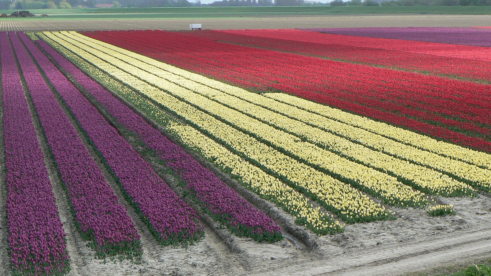Goeree-Overflakkee, Netherlands - one of the green destinations to visit this year