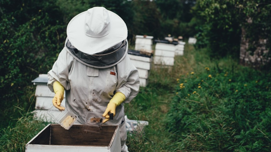A beekeeper and her bees