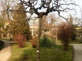 Botanical Garden of Padua