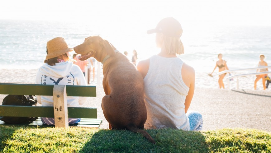 Dog friendly holiday by the sea in Marches (Italy)