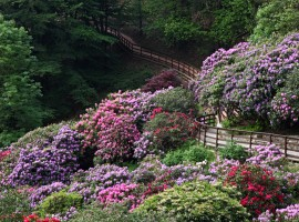 Conca dei Rododendri: one of the most beautiful parks of Italy