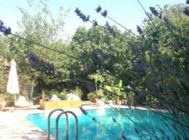 Fig Garden, holiday homes in Turkey