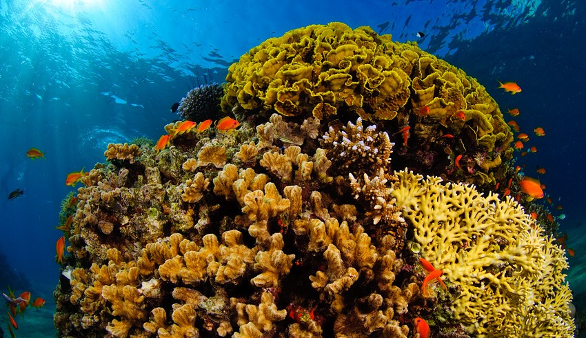 Red_sea_coral_reef
